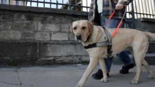 Blind Frau aus Koblenz mußte Lebensmitteldiscounter verlassen wegen Blindenhund
