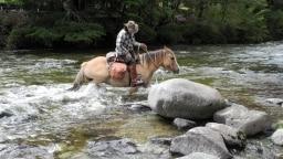 Reiter und Pferd im Wasser