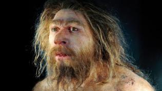 Portraitansicht einer Reproduktion des Homo neanderthalensis