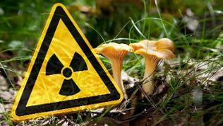 """Pilze auf einem Waldboden. Daneben ein Zeichen für """"Radioaktivität""""."""