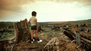 Junge steht vor zerstörter Regenwaldfläche.