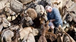 Damir Stulina inmitten seiner Esel
