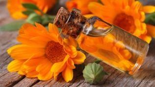 Ein Glasfläschchen Calendulaöl und Blüten