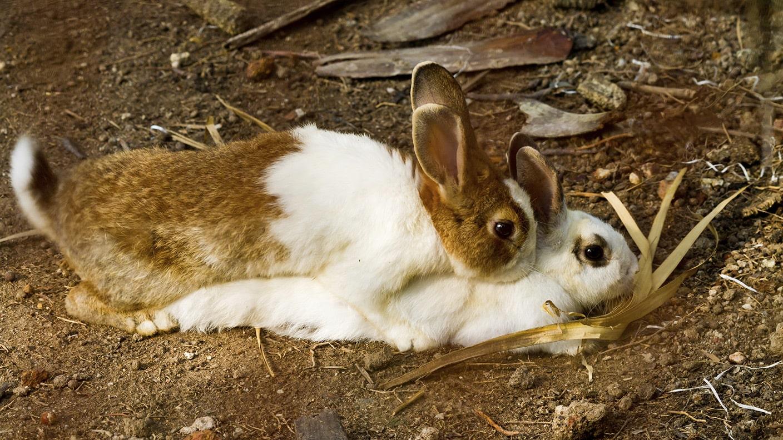 heiliges karnickelgate was der papst ber kaninchen wissen sollte swrinfo. Black Bedroom Furniture Sets. Home Design Ideas