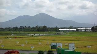 Die von Vulkanen umgebenen Felder des IRRI