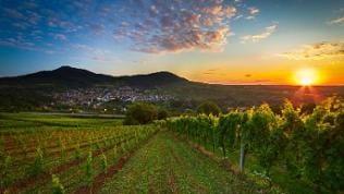 Sonne über Weinbaulandschaft