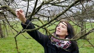 Eine Frau schaut sich die Knospen eines Baumes an
