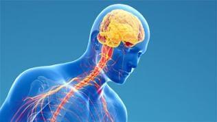 Darstellung des Zentralen Nervensystems, Sujet Parkinson