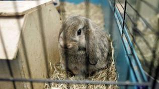 Kaninchen hinter Käfigstäben