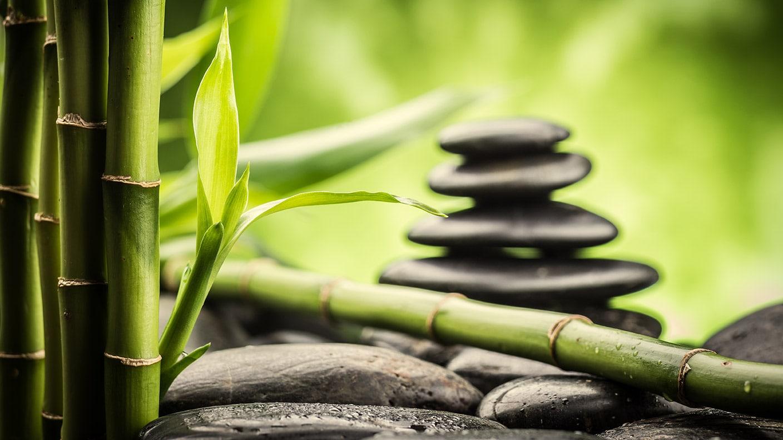 bambus asiatische riesengr ser gartentipps gr nzeug. Black Bedroom Furniture Sets. Home Design Ideas