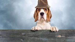 Hund mit Hut schaut über einen Tisch