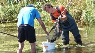 Freiwillige Helfer sammeln  bei Elpershofen (Baden-Württemberg) in der Jagst tote Fische.