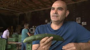 Ein Mann hält eine Salatgurke vor sich.