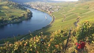 Aussicht vom Kröver Steffensberg