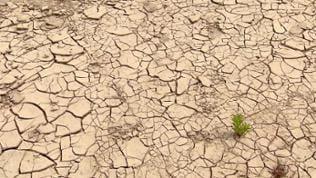 rissiger, ausgetrockneter Boden