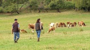 Annette Maier und ihr Vater Ernst Hermann mit ihren Rindern auf der Weide