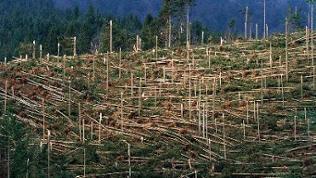 """Ein von Sturm """"Lothar"""" zerstörtes Waldstück im Schwarzwald"""