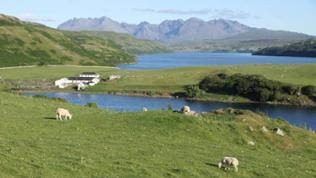 grüne Landschaft mit Bergen und Schafen im Vordergrund