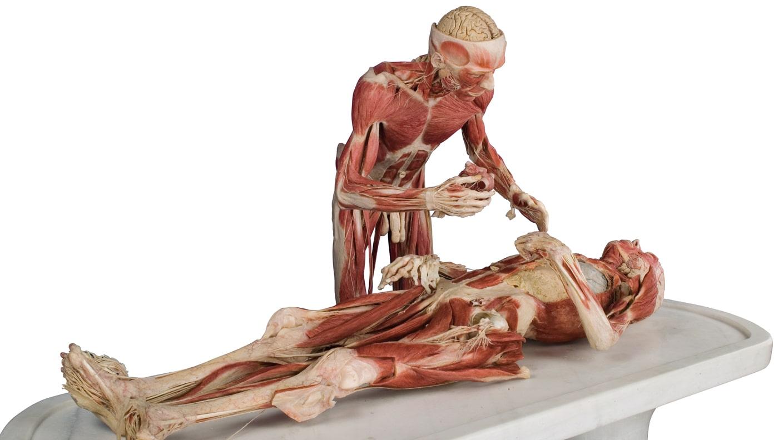Ziemlich Menschliche Anatomie Museum Fotos - Anatomie Ideen ...