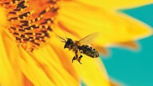 Kaffee oder Tee - Bienenparadies