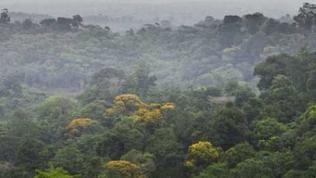 7mm-Frosch versteckt im Regenwald