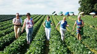 SWR Landfrauen 2016 gehen durch ein Erdbeerfeld