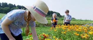 Kinder pflücken auf einem Gemeinschaftsacker Blumen