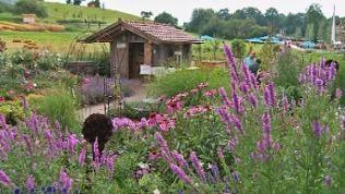 Kleine Holzhütte zwischen Blumenwiesen und Feldern