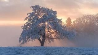 Schnee bedeckter Baum im Nebel