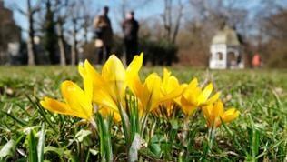 Ein Paar beim Frühlingsspaziergang.