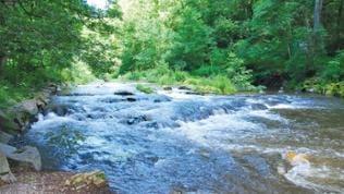 Blick auf den Fluss Lieser im Wald