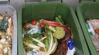 Eine mit Biomüll gefüllte grüne Tonne mit Abfällen, die nicht in die Biotonne gehören