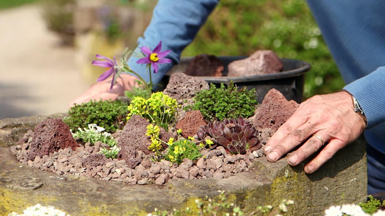 Faszination steingarten gr nzeug swr mediathek for Pflanzen fa r flur