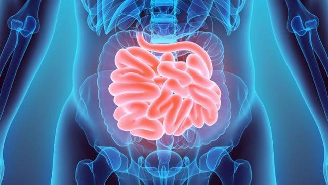 Darmtherapie bei neurologischen Krankheiten | Wissen | SWR2 | SWR.de