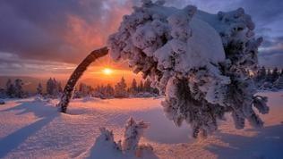Schneebedeckter Baum vor Sonnenuntergang