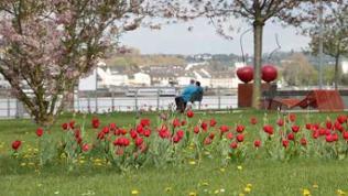 Hafenpark Bingen