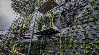 Fassade Sao Paulo, Begrünung, vertikaler Garten