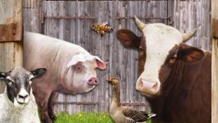 """natürlich-Serie """"Unsere Nutztiere"""" - Collage"""