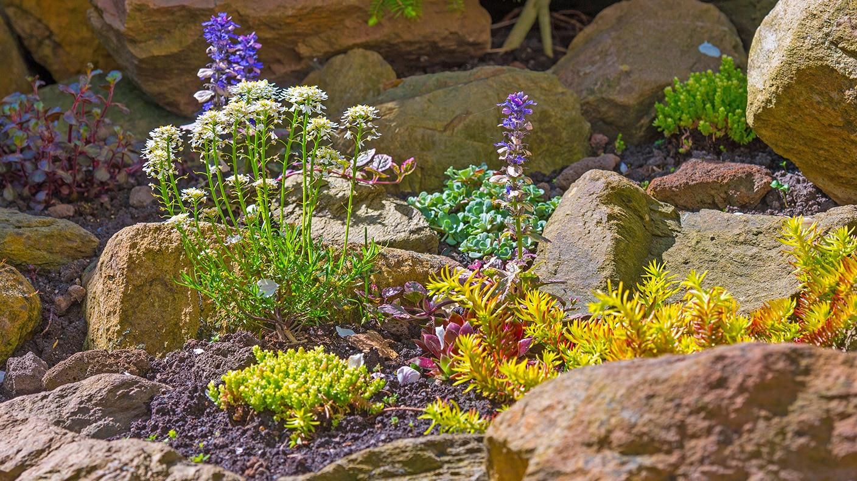steingarten bilder beispiele, gartentipp: ideale pflanzen für den steingarten | tipps | swr4 baden, Design ideen