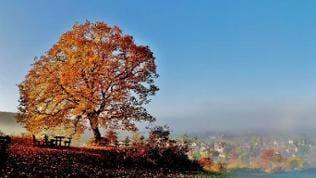 Talnebel unter dem Lindenbaum