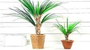 Fertig ist die Palmen aus Papier