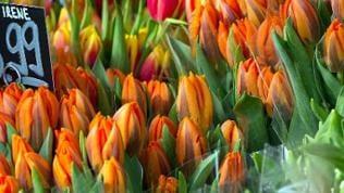 Billigblumen beim Discounter oder im Supermarkt.