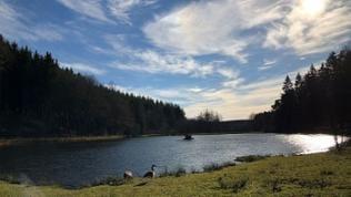 Teich an der Spießbratenhalle in Schillingen