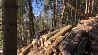 Im Wald beobachten wir, wie Sturmholz vom Herbst aus den Berghängen rausgeholt wird. Ein mühseliges Geschäft!