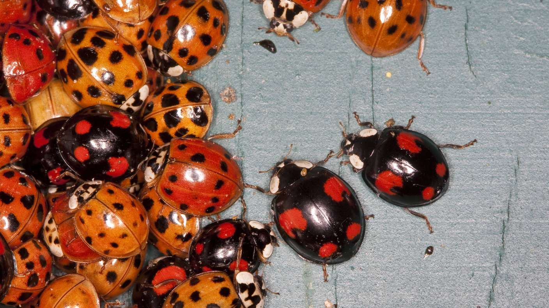 Deshalb können Käfer nicht wachsen! | Rettet die Insekten! | SWR Wissen