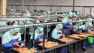 China - In Handarbeit werden Mandarinen für die Konservenproduktion bearbeitet.