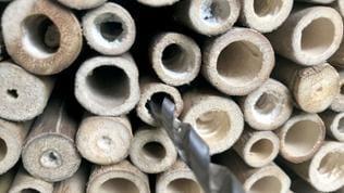 Grobe Inhalte der Röhren mit einer Feile oder einer langen Schraube entfernen. Dann mit Pfeifenputzern oder einer kleinen Bürste die Gänge schön sauber ausputzen.