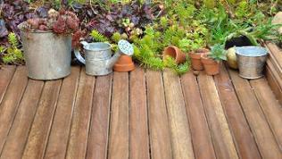 Holzterrasse und Sukkulenten