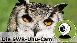 Uhu-Webcam