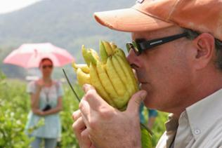 Foodhunter Mark Brownstein riecht an einer gelben Buddha-Handzitrone